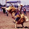 Cheyenne Frontier Days Gears Up for Rodeo Thrills, Western Celebrations