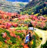 Utah Valley Expecting Scenic Fall Colors to Surpass Previous Years
